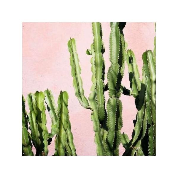 Bougie Parfumée Cactus Oasis